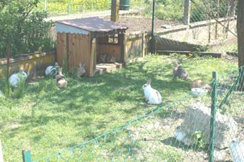 Les news for Parc a lapin exterieur